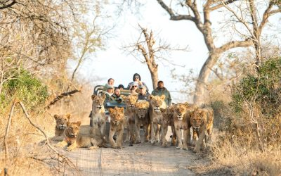 Adventures To South Africa – Secret Insights At Royal Malewane